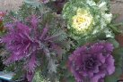 bedding_fall_winter_sun_kale