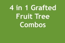 fruit_tree_combo_image2
