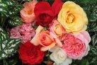 rose_main-image